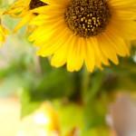 yellow - The August Break - day three