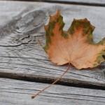 Fall longing